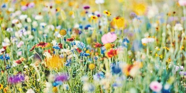 Field of Multicolored Flowers